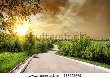 Asphalted road and birches at the sunset - stock photo