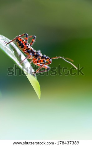 Assassin bug sitting on a leaf - stock photo