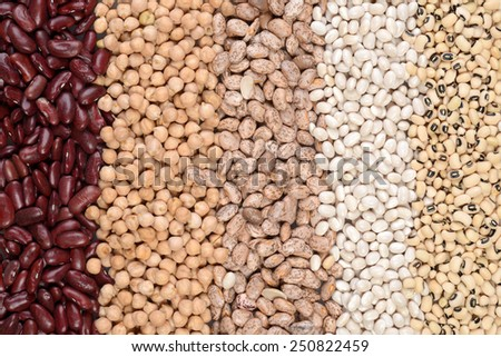 assorted beans in a row - stock photo