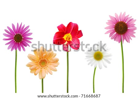 Assorted branch blooms - stock photo