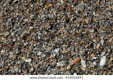 Assorted broken seashells on beach sand - stock photo