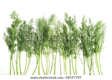 assorted bunch of dill on white background - stock photo