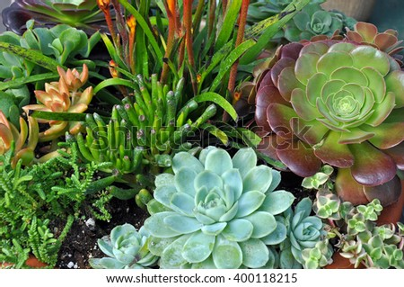 Assorted cacti and other succulent plants - stock photo