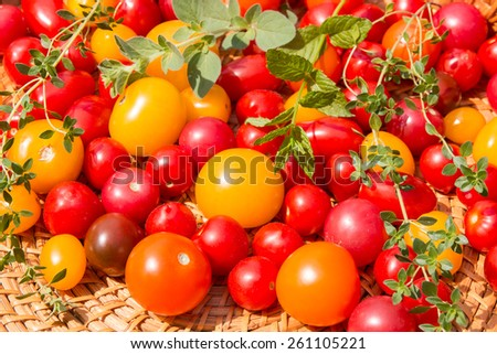Assorted colorful tomatoes and herbs from a garden. selective focus - stock photo