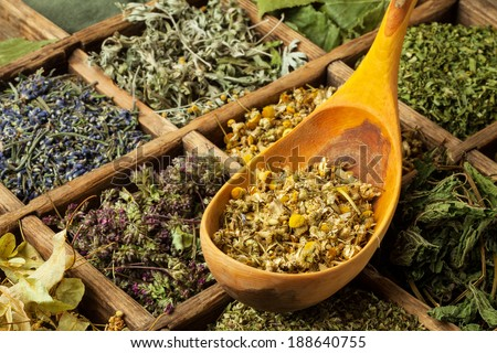 Assorted dried medical herbs tea. - stock photo