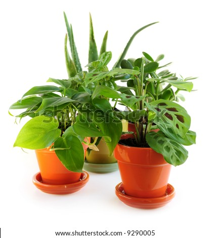 Assorted green houseplants in pots isolated on white background - stock photo