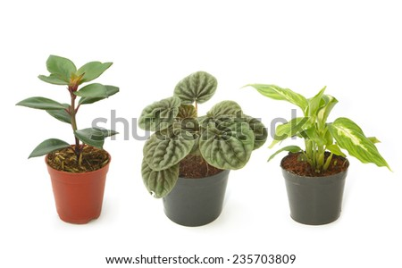 Assorted green houseplants in pots ,Ornamental plants - stock photo