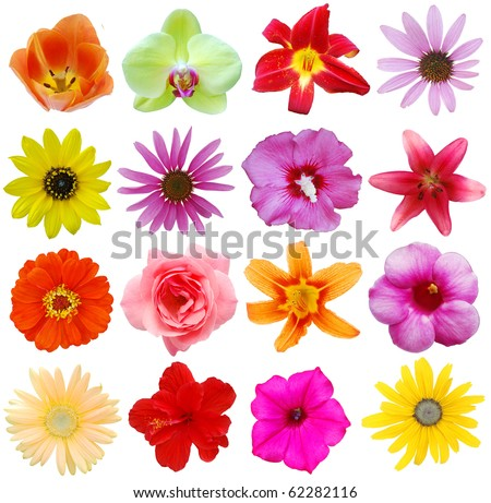 Assorted in America blooms - stock photo