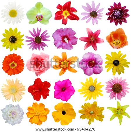 Assorted in 25 flowers style in USA