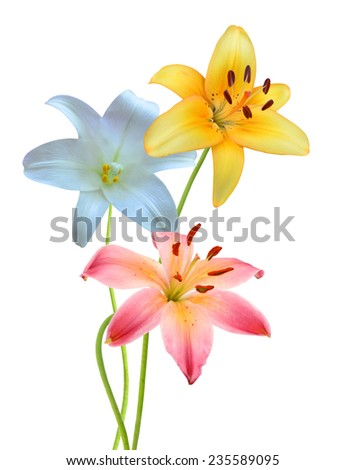 Assorted lily flowers on a white background. - stock photo