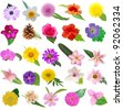 Assorted of 25 blooms in leaves - stock photo