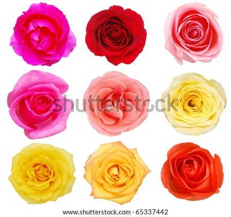 Assorted rose blooms in collection - stock photo