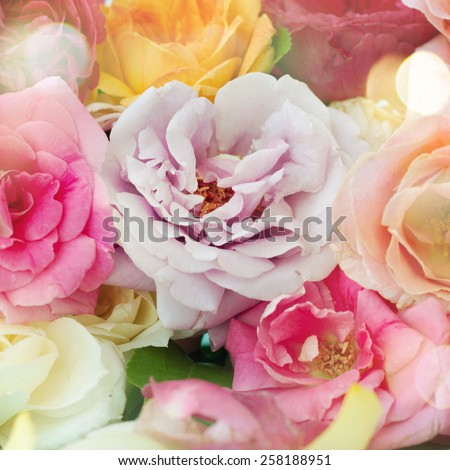 Assorted roses - stock photo