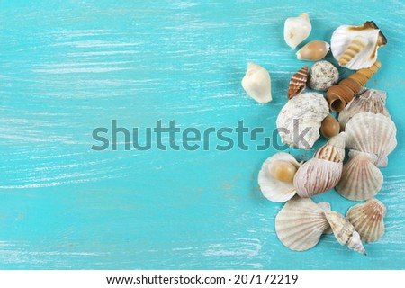seashell collection stock images royalty free images vectors