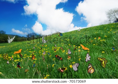 Assorted Species of Butterflies in a dandelion Meadow - stock photo