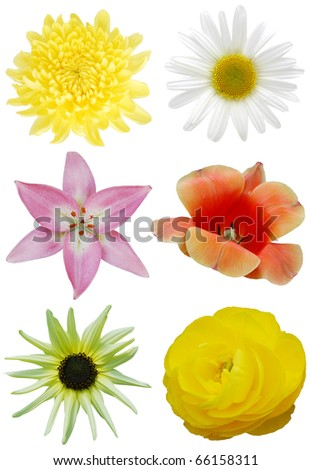 Assorted spring blooms - stock photo