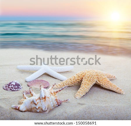Assorted starfish and sea shells on a beach, main focus on first starfish. - stock photo