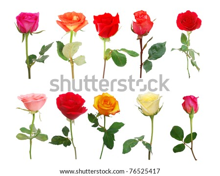 Assorted ten stemless roses decorating - stock photo