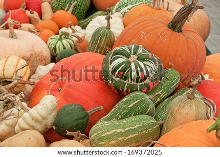 Assorted varieties of squashes on display - stock photo