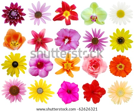 Assortment blooms in America