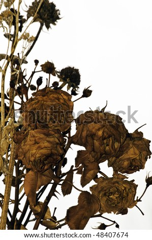Assortment of dried roses, sunflowers and the thorny stems - stock photo