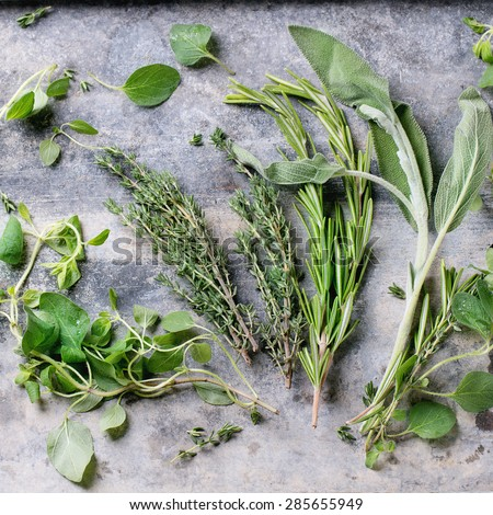 Assortment of fresh herbs thyme, rosemary, sage and oregano over gray metal background. Top view. Square image - stock photo