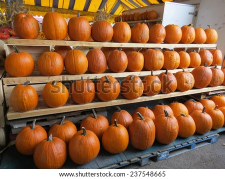 Assortment of orange pumpkins for jack o' lanterns at farmers' market for Halloween - stock photo