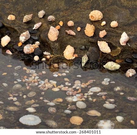 Assortment of sea shells - stock photo