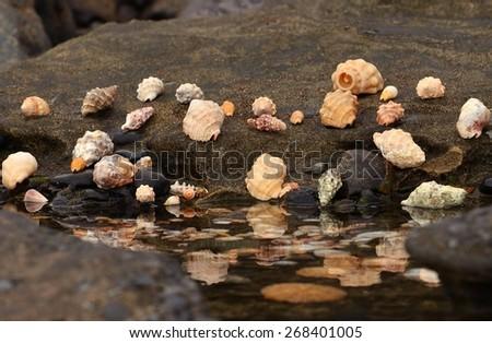 Assortment of seashells on the shore - stock photo