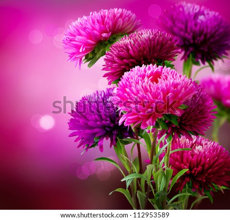 Aster Autumn Flowers Art Design - stock photo