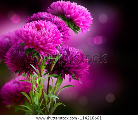 Aster Autumn Flowers Art Design over Black Background - stock photo
