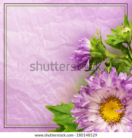 Aster flower composition and frame on lilac background