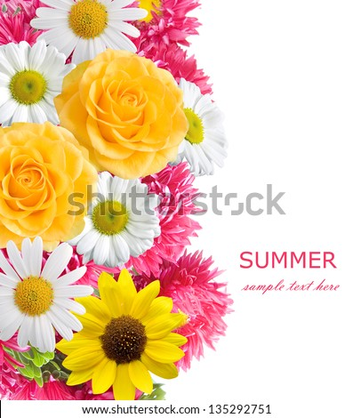 Aster, roses, sunflowers and chamomile flowers background isolated on white with sample text. Summer flowers - stock photo