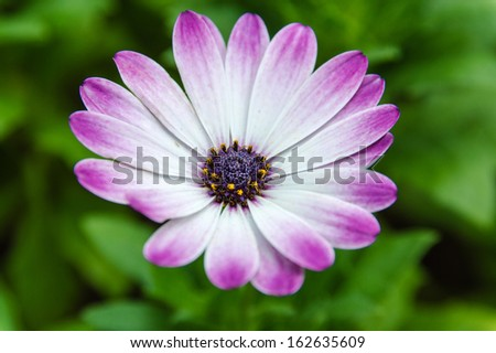 Asteraceae or Compositae (commonly referred to as the aster, daisy, or sunflower family), are an exceedingly large and widespread family of Angiospermae. - stock photo