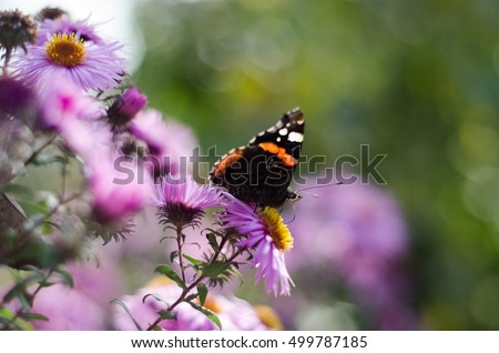 Asters butterfly flower blue lilac
