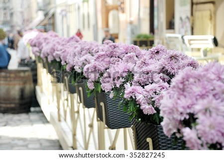 Asters in pot on the street