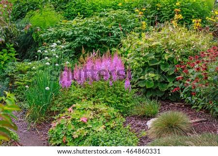 Exceptionnel Astilbe Chinensis (Maxim) In Garden