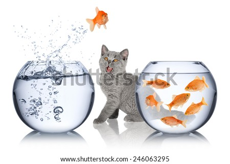 astonished cat watches impossible fish jump - stock photo