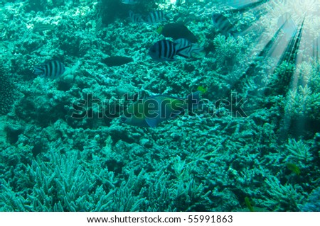 Astonishing undersea world of Red Sea and sunbeams in it. - stock photo
