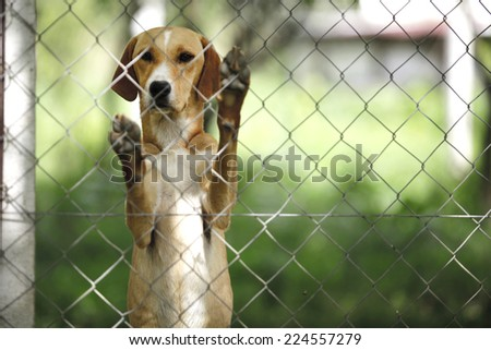 Asylum for dogs - stock photo