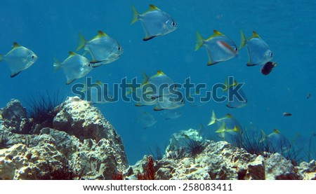at the coral reef of Anemone Reef, Thailand - stock photo
