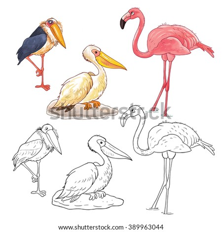 African Animals. Cute African Birds. Pelican, Marabou And Toucan