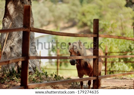 at the zoo behind a wooden fence stands with white mane pony - stock photo