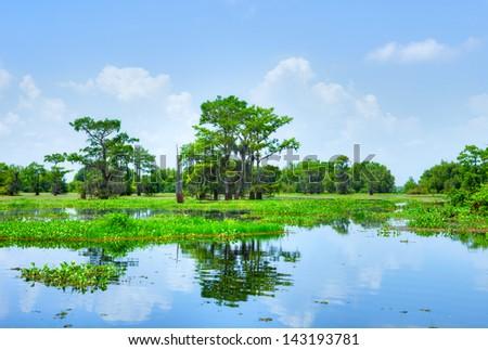 Atchafalaya River Basin, with Cypress trees. - stock photo