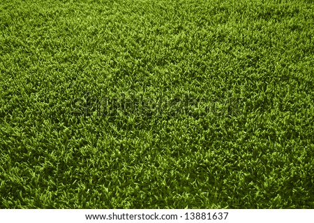 Athletic Field Texture