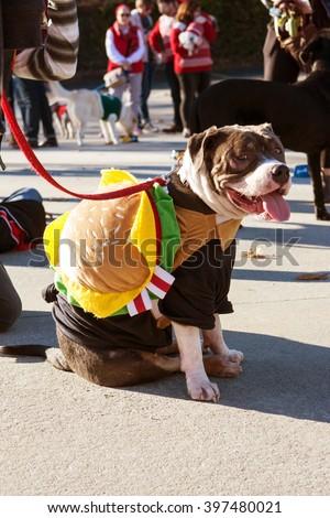 ATLANTA, GA - DECEMBER 5:  A dog wearing a hamburger costume sits after walking in a dog costume parade on December 5, 2015 in Atlanta, GA.  - stock photo