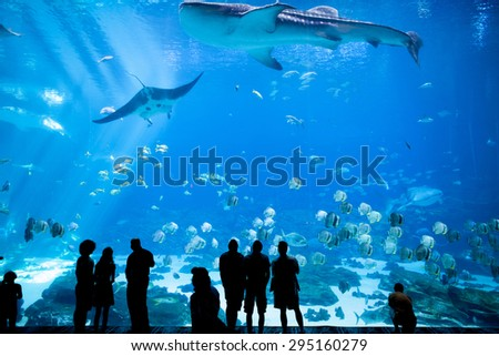 ATLANTA, GEORGIA-JUNE 30, 2015: Unidentified people watch a whale shark swim by at the Georgia Aquarium in Atlanta, Georgia - stock photo