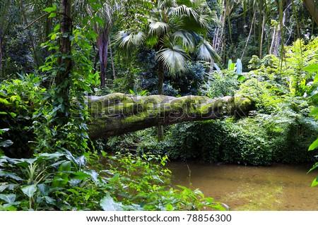 Atlantic forest - stock photo