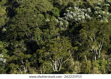 Atlantic Forest in Minas Gerais State in Brazil