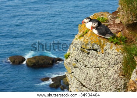 Atlantic Puffins. Latrabjarg bird cliffs in Icelandic West Fjords. - stock photo